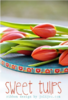 Webband Farbenmix Sweet Tulips 12mm